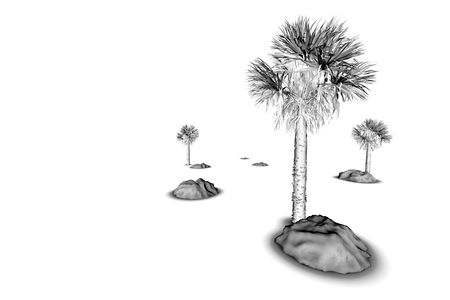 Tropical Tree in black and white on white background isolated Stock Photo