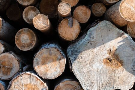 wood stack with round cut tree wood in shade and sun, close-up view 스톡 콘텐츠