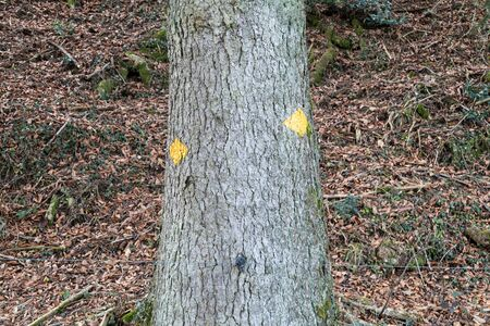 several yellow hiking trail signs with spray paint on a tree in front of an autumnal forest floor covered with leaves, by day