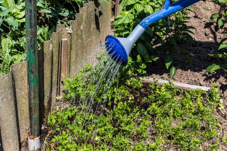 watering can in a Vegetable Garden Standard-Bild