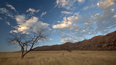 Sunset viewing single tree in dry grass field with clouds.