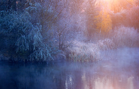 riverside trees: Mist morning nature with frozen plants
