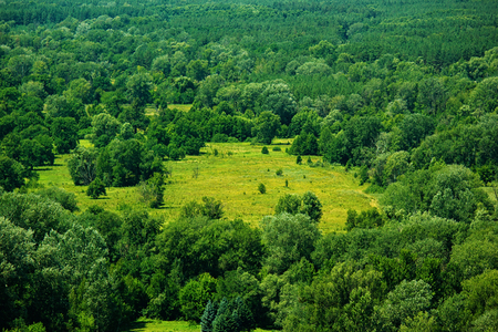 air view: Air view of meadow in forest Stock Photo
