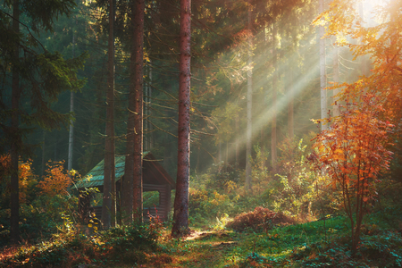 Autumn forest with sun rays and wooden blockhouse pavilion. Warm weather in pine forest scenery Stock Photo