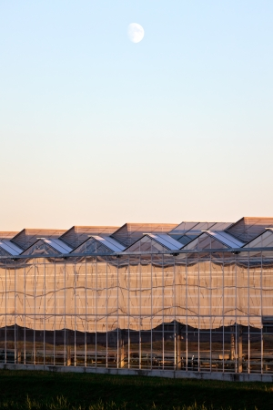 sideview: Sideview of a greenhouse in the evening with a rising moon Stock Photo