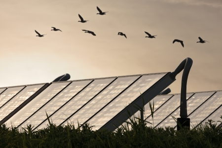 Large group of Solar water heating systems with geese flying by photo