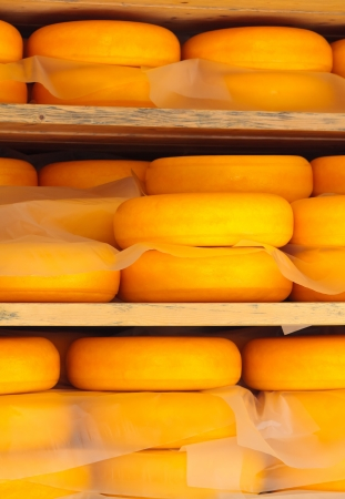 edam: Dutch cheese ripening on wooden shelfs