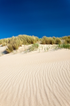 sawgrass: Sand dunes with beach grass at the island Texel in The Netherlands
