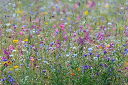 Field with an abundance of colorful vibrant spring flowers Stock Photo