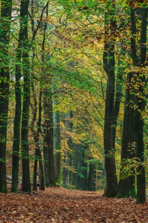 veluwe: Autumn forest path in national park Veluwe in The Netherlands Stock Photo