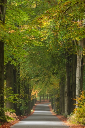 veluwe: Autumn road in national park Veluwe in The Netherlands