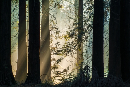 Rays of sunlight in an autumn forest in The Netherlands Stock Photo