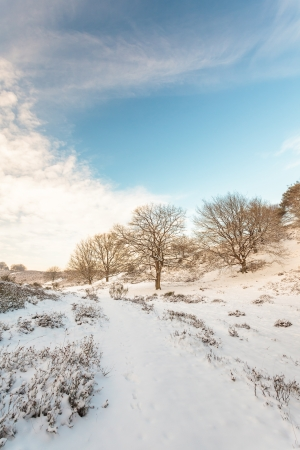 Winter landscape in national park Veluwe in The Netherlands photo