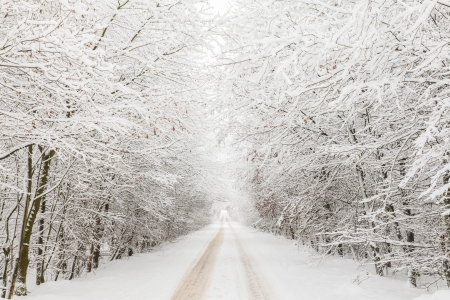 veluwe: Winter landscape with road under a bow of snow covered trees