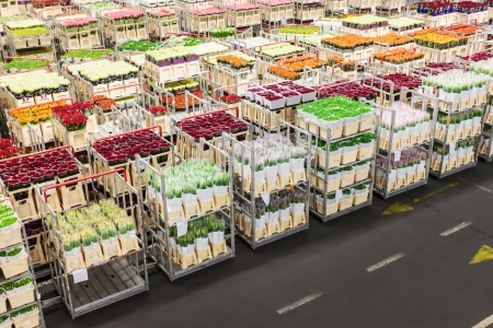 Crates with flowers on a Dutch flower auction ready for sale Stock Photo - 17705563