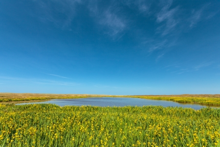 salt marsh: Coastal lake with blooming yellow narcissus on the Dutch island Texel Stock Photo