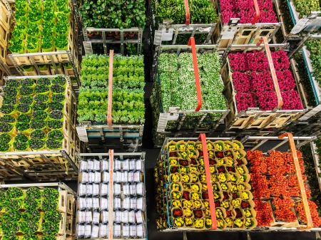 Caisses de fleurs colorées et de plantes sur une vente aux enchères de fleurs néerlandais