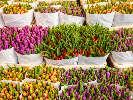 Assortment of bouquets of colorful tulips in a flower shop photo
