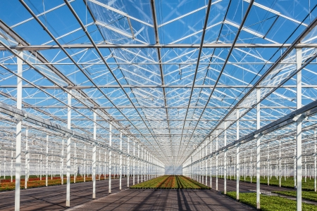 Interior of a partly empty greenhouse against a blue sky Stock Photo