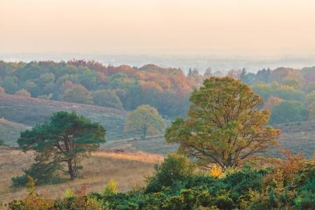 posbank: Vibrant autumn view of the national park Veluwe in Gelderland, The Netherlands