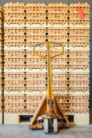 Verpackte frische Eier auf einem Bio-Hühnerfarm zur Verteilung bereit