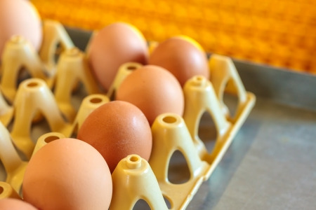 Crate with fresh eggs on top of a conveyor belt inside an organic chicken farm photo