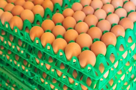 Les caisses en plastique avec des oeufs blancs et bruns frais sur une ferme de poulet bio Banque d'images