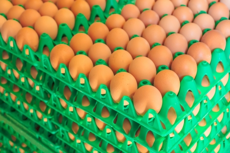 Plastic crates with fresh white and brown eggs on an organic chicken farm