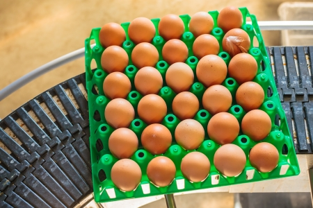 Conveyor belt transporting a crate with fresh eggs photo