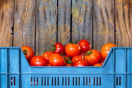 Blauw krat met verse tomaten in de voorkant van een oude houten achtergrond