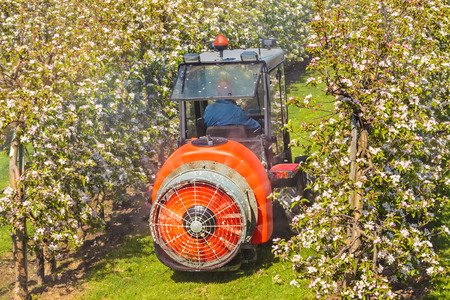 BETUWE, THE NETHERLANDS - APRIL 16, 2014  A farmer is sprinkling his blooming orchard at The Betuwe in Gelderland, The Netherlands