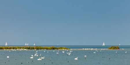 markermeer: Panoramic image of the IJsselmeer lake in The Netherlands with swans and sailing boats