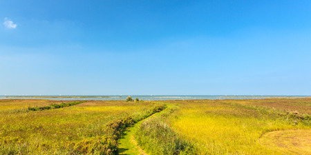 markermeer: Panoramic image of a field with reed in front of the Dutch IJsselmeer