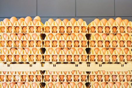 mass storage: Crates with fresh eggs in front of a grey wall on an organic chicken farm Stock Photo