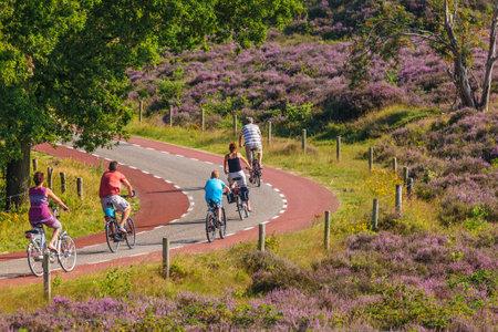 ある, オランダ - 2015 年 8 月 13 日: サイクリング観光客がある、オランダでオランダ国立公園フェリューウェゾームと咲く紫色のヒース 報道画像