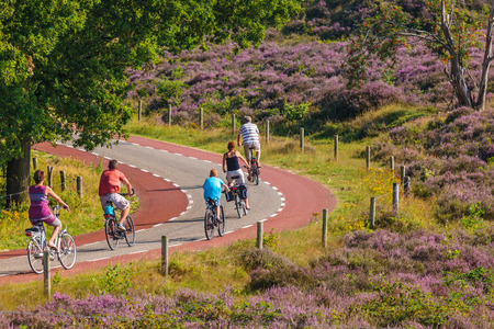 RHEDEN, THE NETHERLANDS - AUGUST 13, 2015: Cycling tourists in Dutch national park Veluwezoom with blooming purple heath in Rheden, The Netherlands 新聞圖片