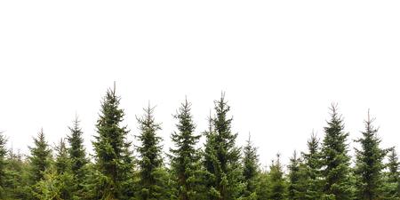 sapin: Rangée de Noël pins isolés sur un fond blanc