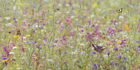 Field with colorful blooming wild spring flowers and butterflies Stock Photo