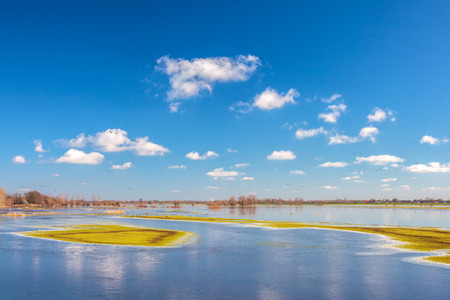 flood area: Flooded field in front of the Dutch river IJssel in the province of Gelderland