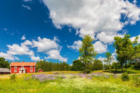 ジギタリスの花が咲き乱れる庭園で春の典型的なスウェーデンの農家