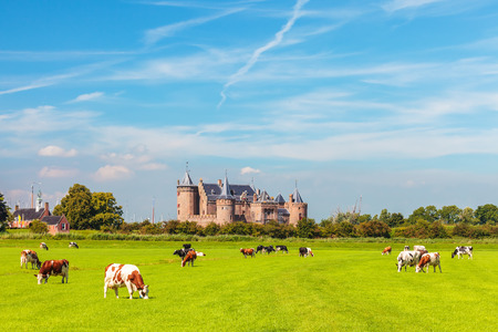 View at the Dutch historic village of Muiden with cows in front