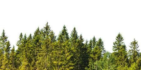 Fila de los árboles de pino de Navidad aislado en un fondo blanco Foto de archivo