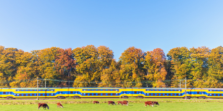 veluwe: Panoramic image of a Dutch train passing colorful autumn trees in Gelderland