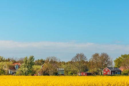 Typical red Swedish houses in summer with blooming coleseed field in front Stock Photo