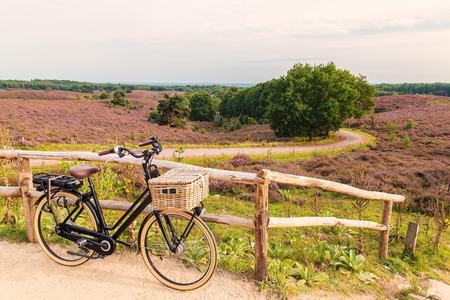 電気黒貨物自転車咲くヒース、オランダとオランダの国立公園、フェルウェのバスケット