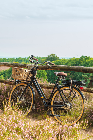 Electric black cargo bicycle with basket in Dutch national park The Veluwe with blooming heathland, The Netherlands