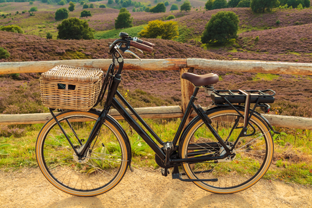 heathland: Electric black cargo bicycle with basket in Dutch national park The Veluwe with blooming heathland, The Netherlands