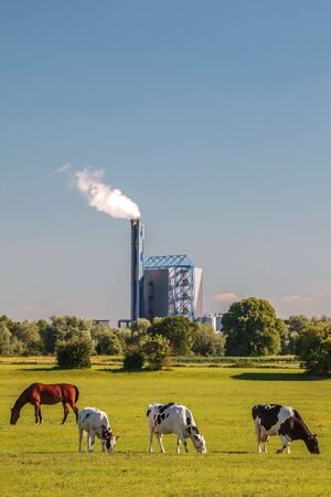 DUIVEN, THE NETHERLANDS - JUNE 25, 2018: View at a Dutch waste incinerator with cows and horse in front in Duiven, The Netherlands