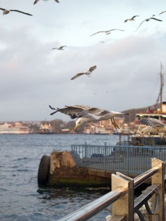 Gulls in the port of istanbul Stock Photo - 2246936
