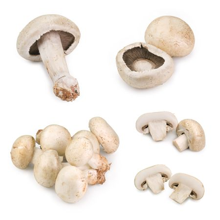 viewpoints: Mushrooms isolated white, different viewpoints. Stock Photo